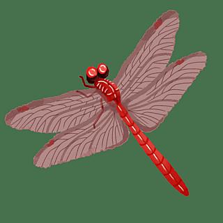 手绘-水彩昆虫动物元素贴纸-蜻蜓