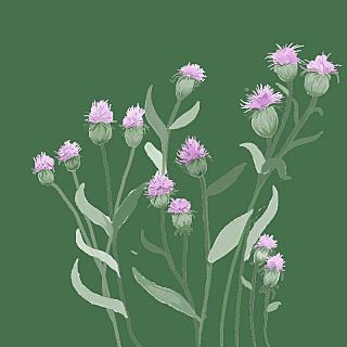 手绘-水彩花卉植物贴纸5