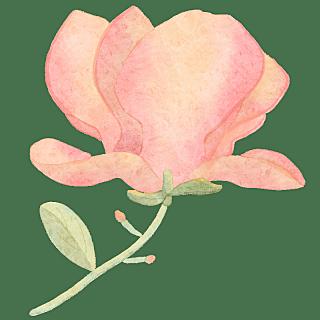 手绘-装饰清新花朵贴纸9