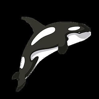 扁平套系-动物-鲸鱼