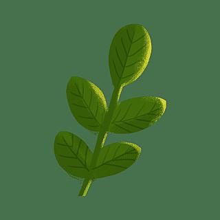 手绘风-植物元素贴纸-叶子