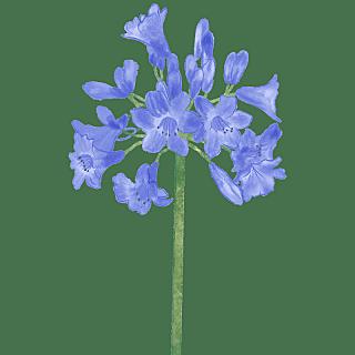 手绘-水彩花卉植物贴纸1