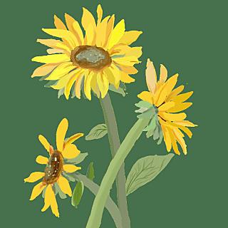 手绘-水彩花卉植物贴纸9