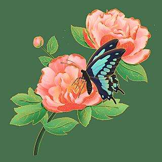 中国风植物花卉贴纸-山茶花