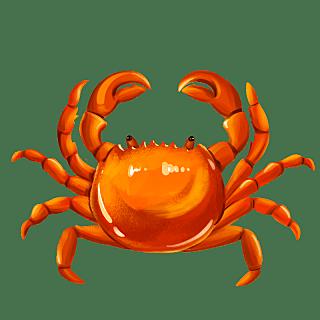 手绘-中秋节美食元素-大闸蟹