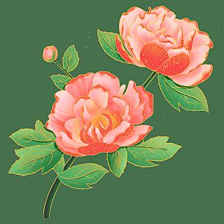 中国风-植物花卉贴纸-牡丹