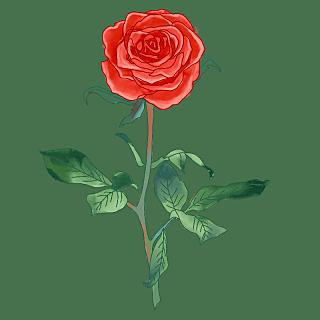 手绘-水彩花卉植物贴纸10