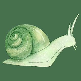 手绘-水彩动物元素贴纸-蜗牛