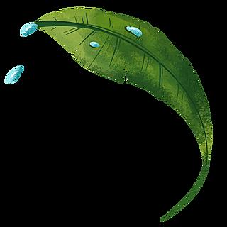 手绘-植物元素贴纸-叶子