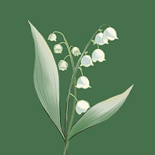 水彩风格-植物花卉贴纸-风铃草