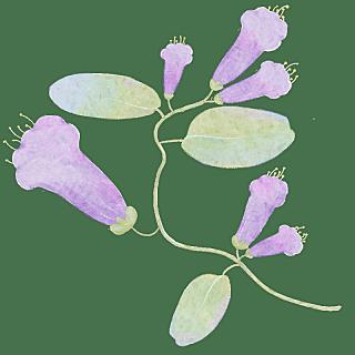 手绘-装饰清新花朵贴纸6