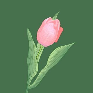 手绘-水彩花卉植物贴纸6