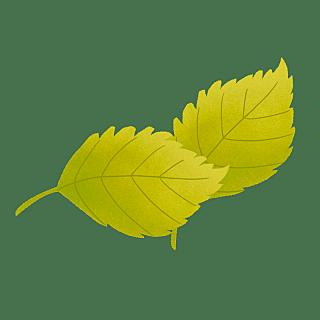 手绘风-植物贴纸-叶子