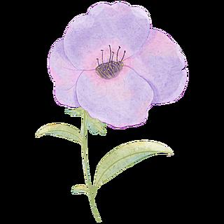 手绘-装饰清新花朵贴纸8