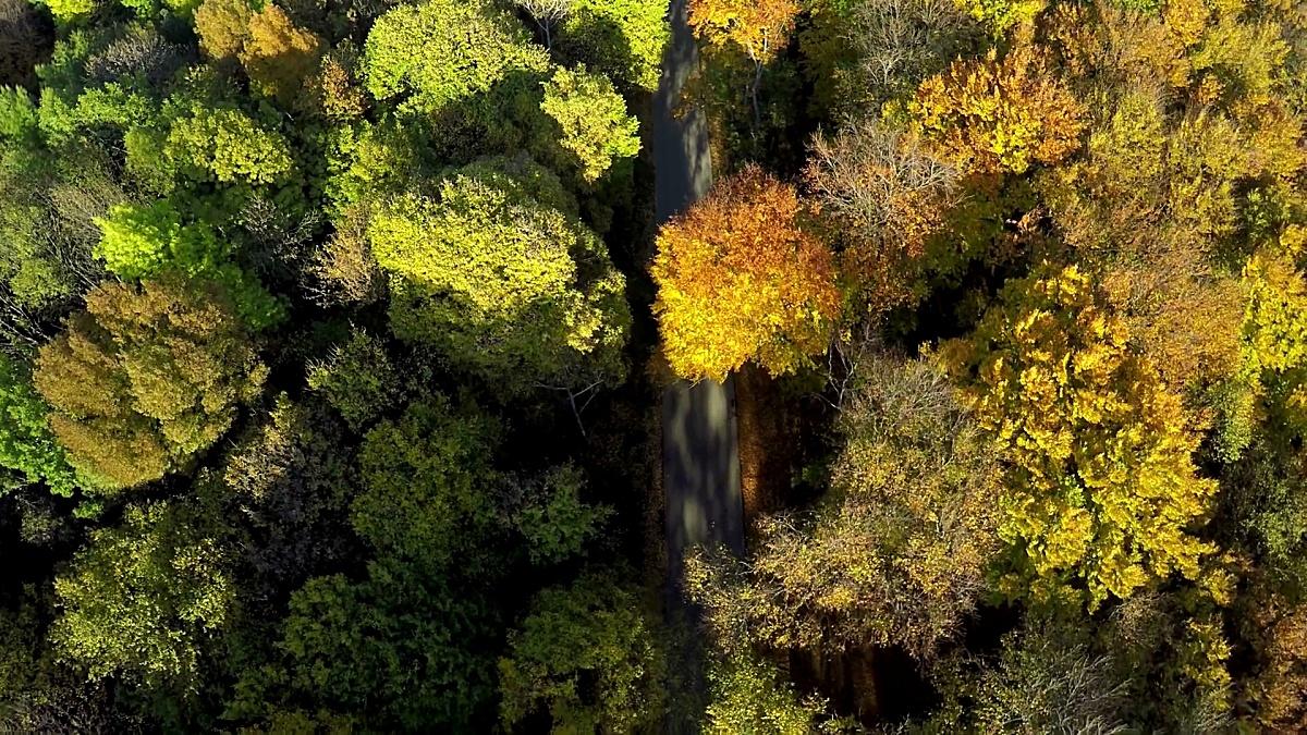 空中拍摄山林中美丽的秋天色彩的树木