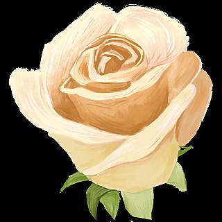 花主题插画-玫瑰花