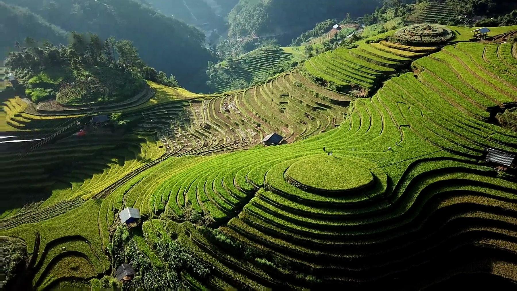 鸟瞰稻田梯田全景山坡与山上稻作