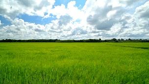 稻田的时间带和天空的云彩。