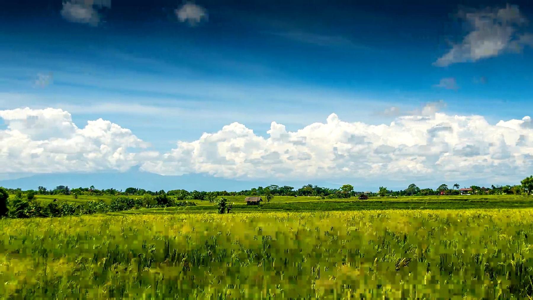 云下绿色稻田时光流逝