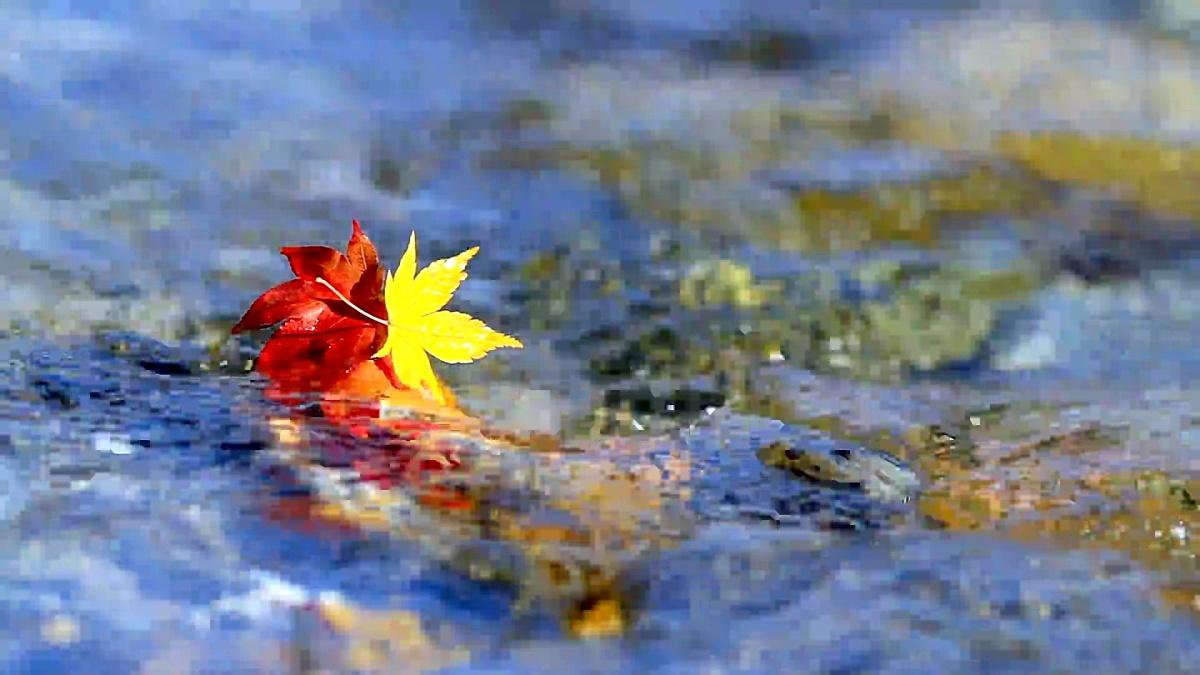 秋天的小溪。