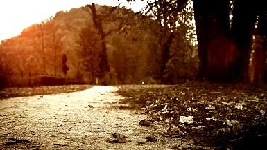 明亮的暖色调镜头 快乐的小男孩在秋天公园打着伞跳跃