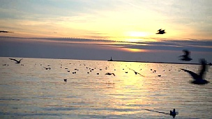 天空中的海鸥。慢动作。