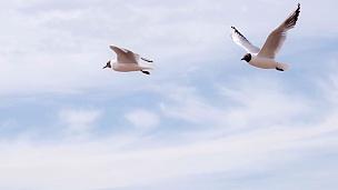 夏日天空中的海鸥