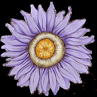 花主题插画-花卉