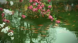 中国公园,池塘里有花、树和鱼。