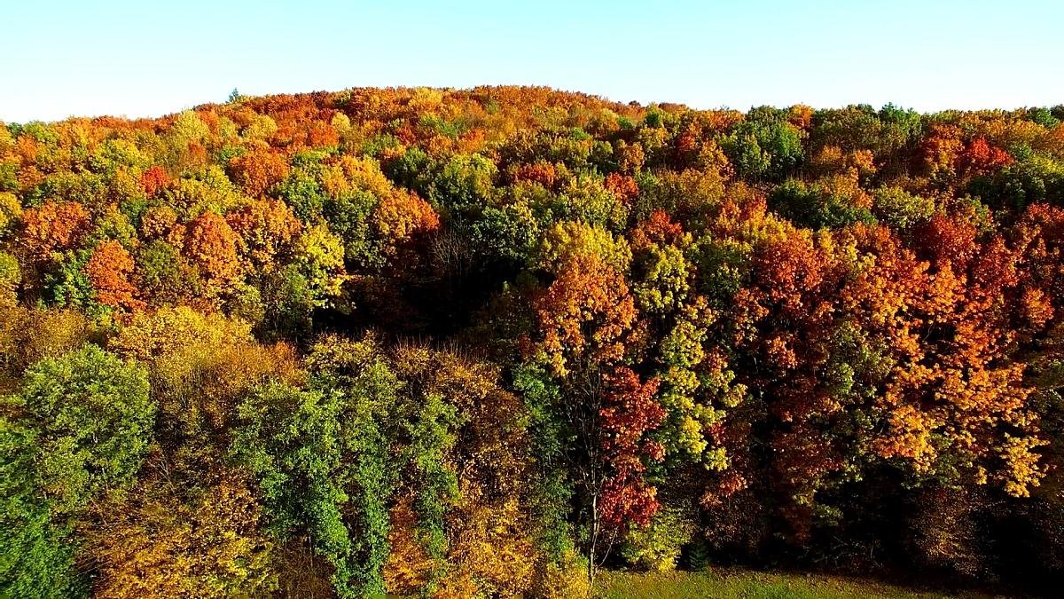 俯瞰秋天令人惊叹的美丽色彩,森林,树木,空中无人机立交桥景观。