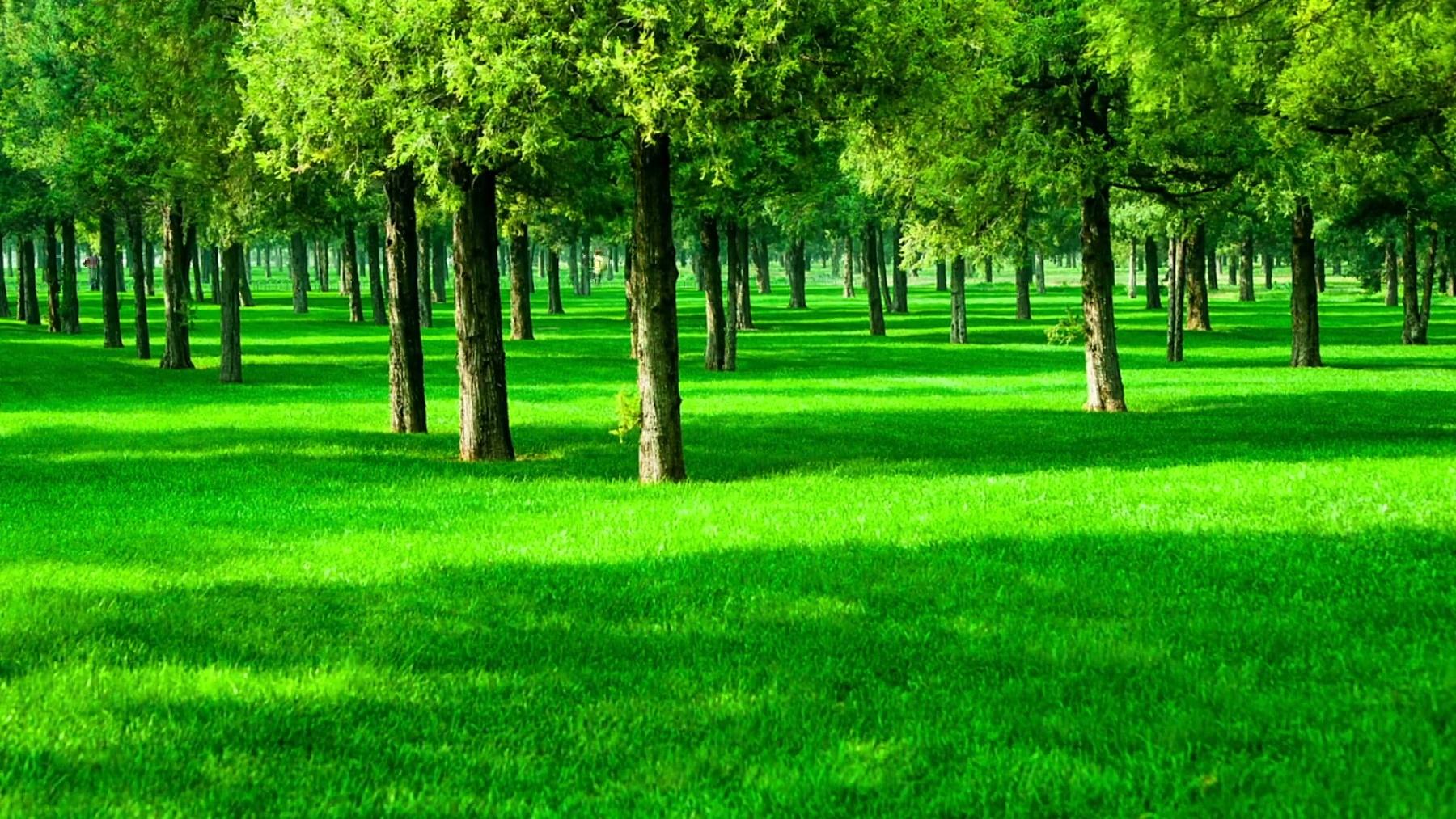 草地上移动的影子
