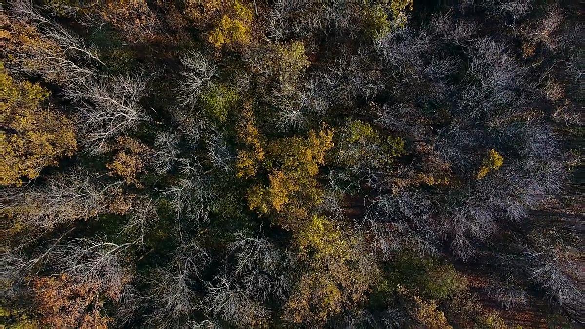 飞过美丽的阳光明媚的秋天森林树木。