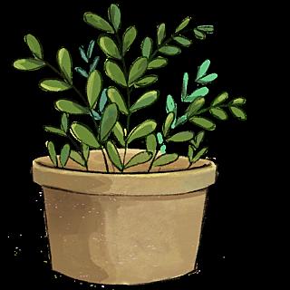 水彩风格-家居-植物盆栽