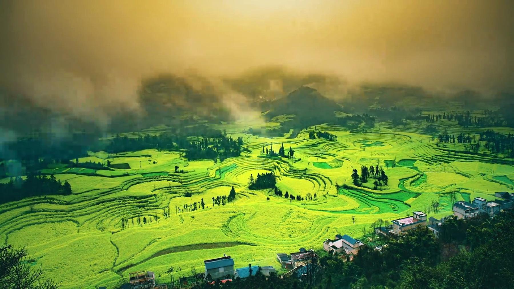 中国罗平油菜田或油菜花田