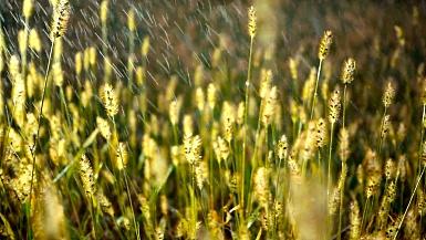 雨落在草地上
