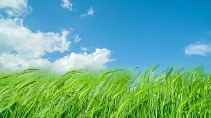 碧绿的草地和蔚蓝的天空