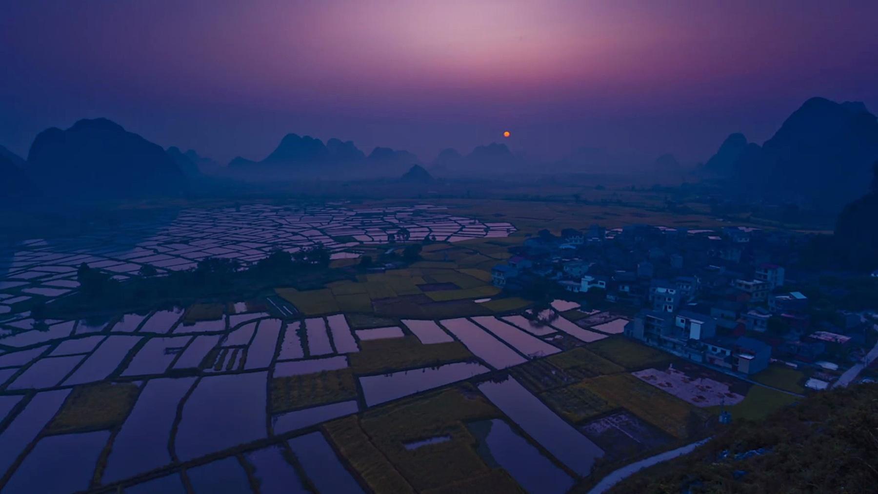 日出时的稻田