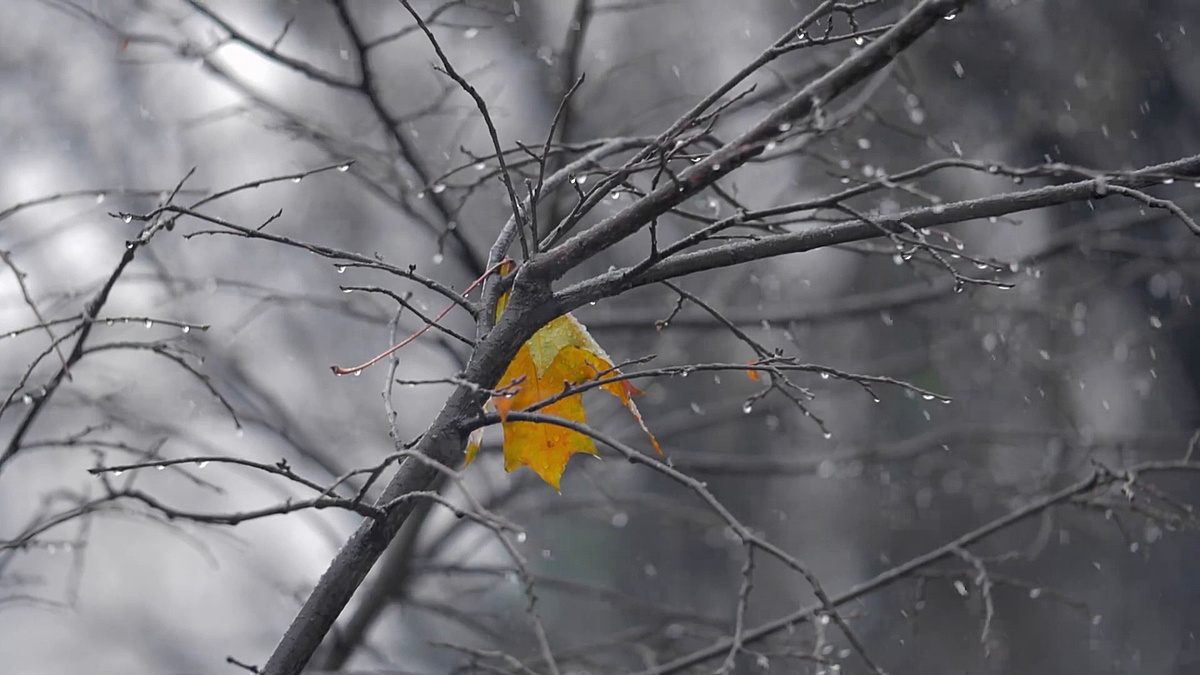 雪下树上寂寞黄叶的秋天场景