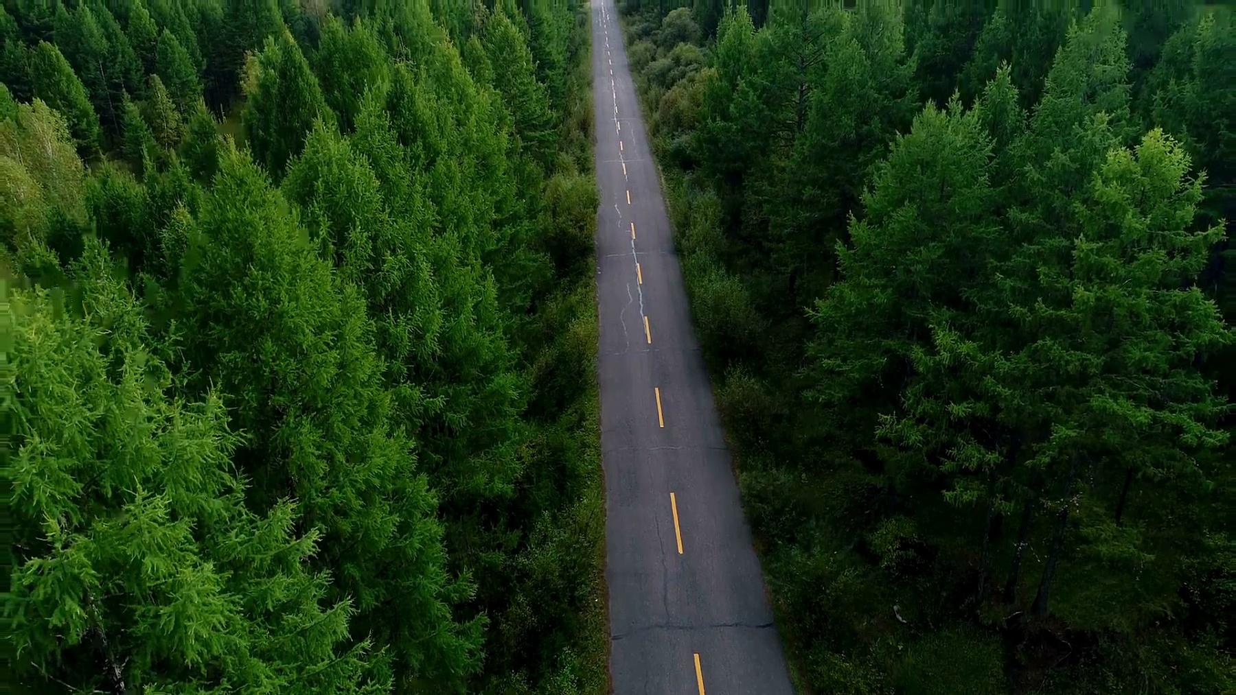 空中无人机镜头视图 从穿过秋天森林景观的小径中升起