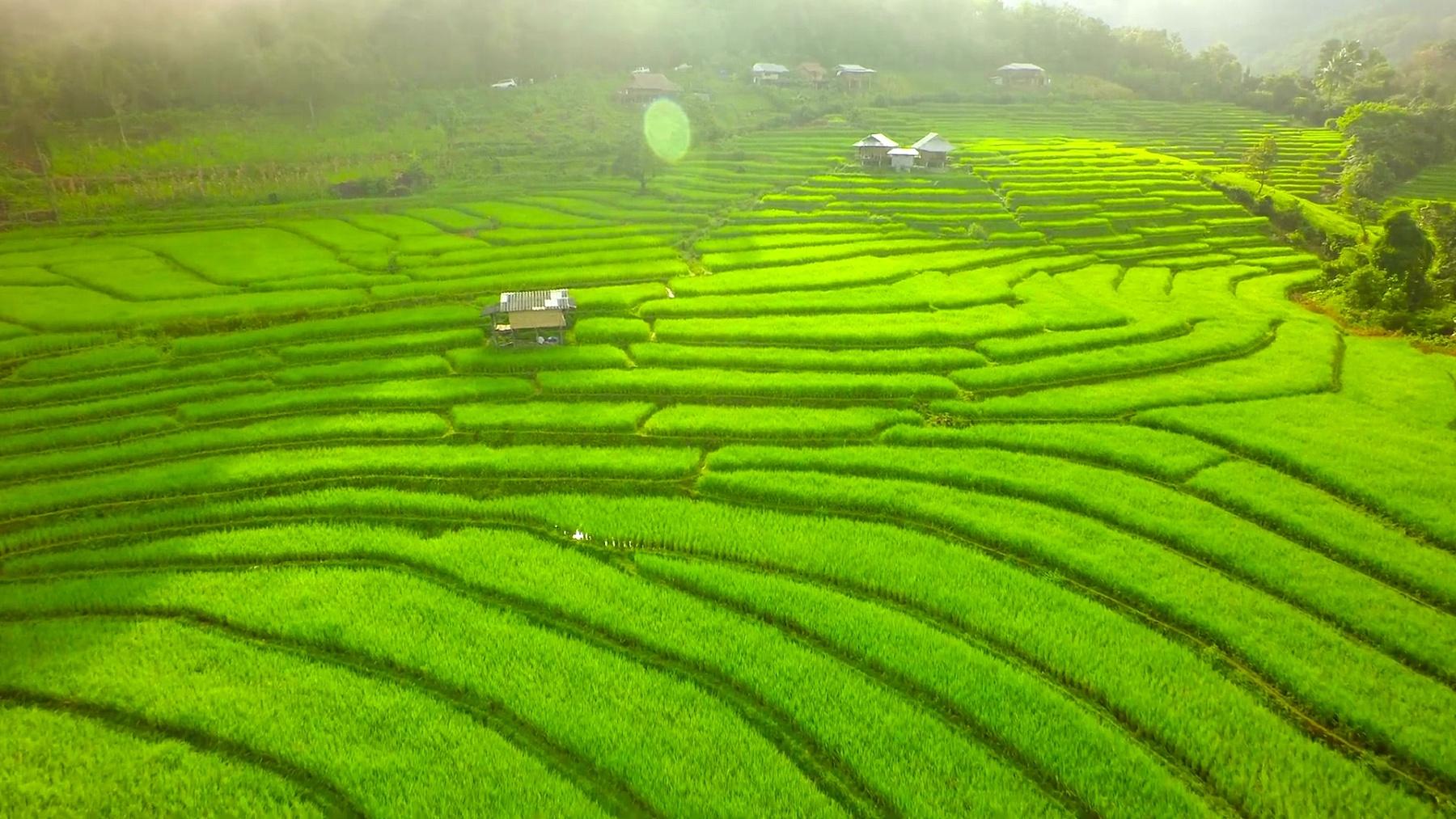 泰国北部的水稻梯田空中拍摄。