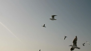 天空中的鸟群