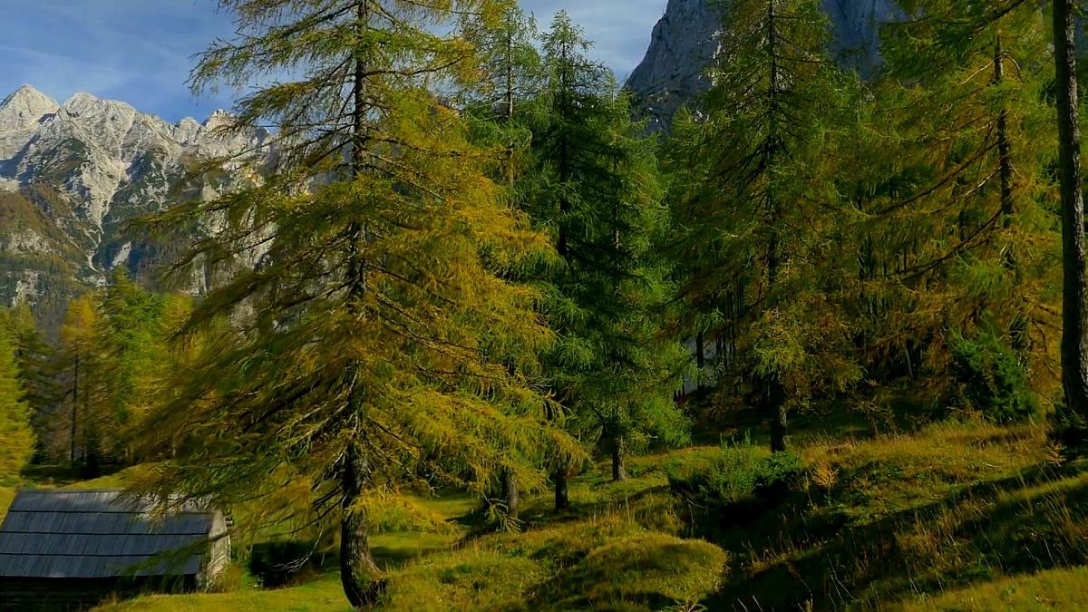 AERAL 秋天山顶上五颜六色的落叶松