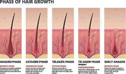 头发,健康保健,信息图表,毛囊,头皮,生物学,脚踏车,生长