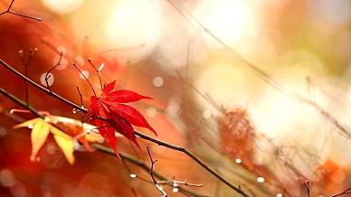 秋天。黄色模糊的阳光背景与五颜六色的落叶。
