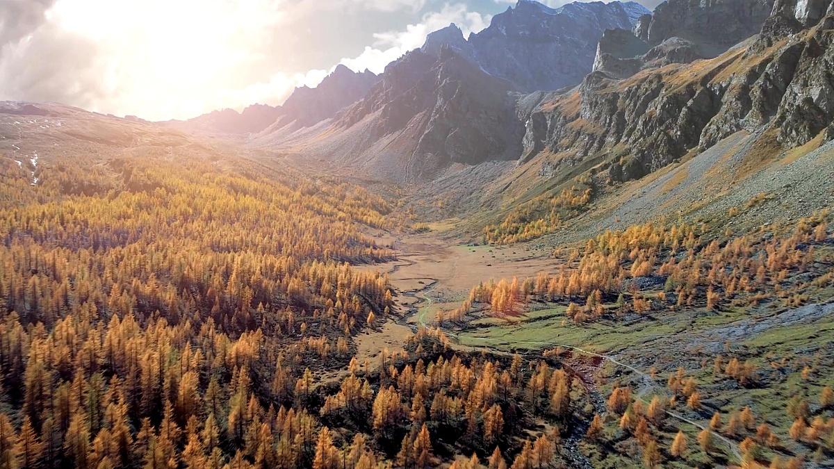 在阳光明媚的秋天,在高山山谷和橙色落叶松森林林中前进天线。阿尔卑斯山户外山野秋天自然在日落或日出时建立。 无人机飞行建立拍摄