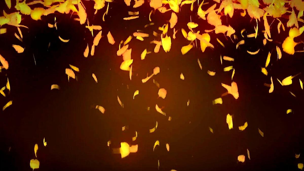秋天的叶子落在黄色的背景上,银杏叶,循环闪光动画,