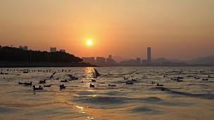 日出在岩石海岸和海鸥降落在海上