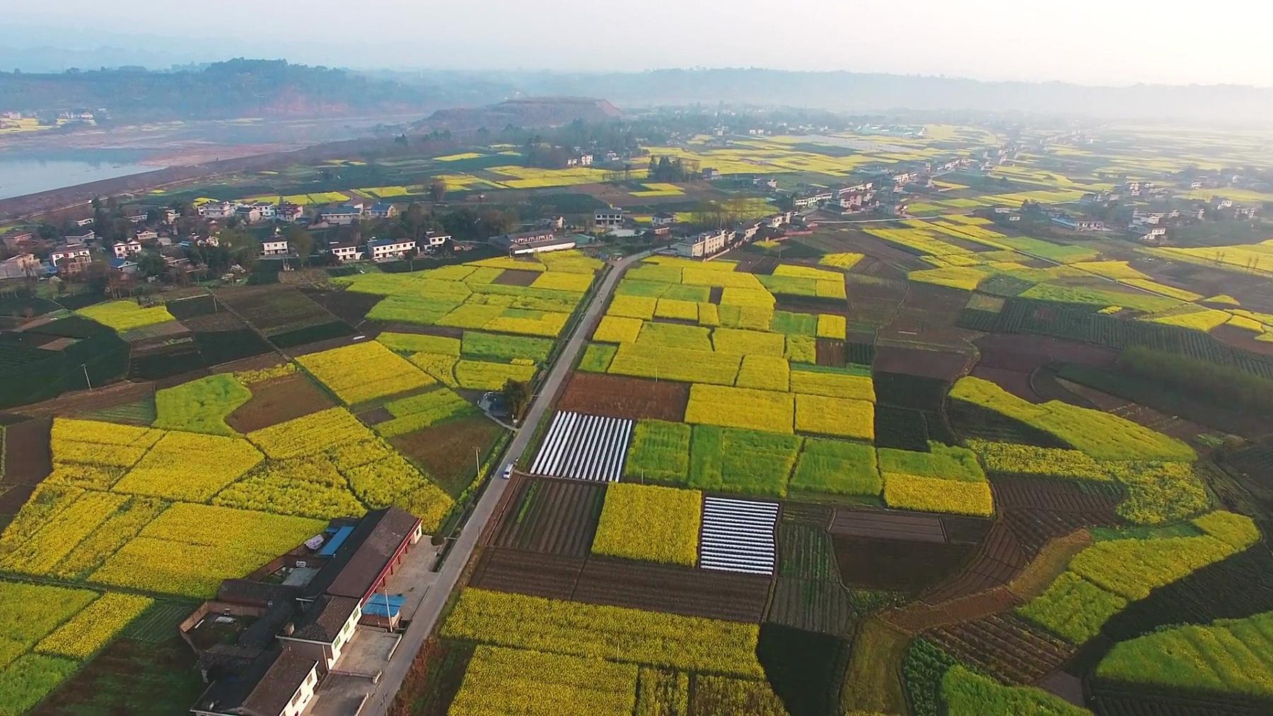 四川中国农村油菜田和村庄景观鸟瞰,