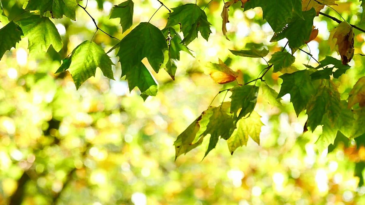 叶子秋天,海德公园,伦敦