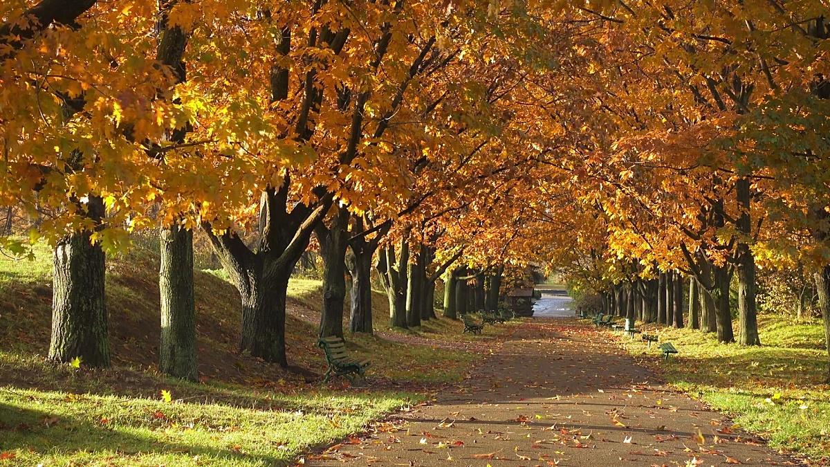 秋天公园的长凳。秋季景观